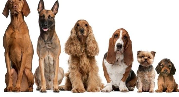 Diversos Cães